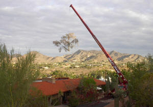 Crane Safely Removing a Tree in Paradise Valley Picture 2