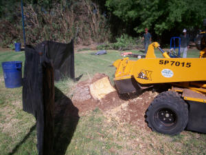 Large Stump Grinder in Action