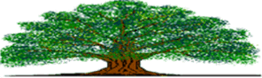 Tidy Tree Logo